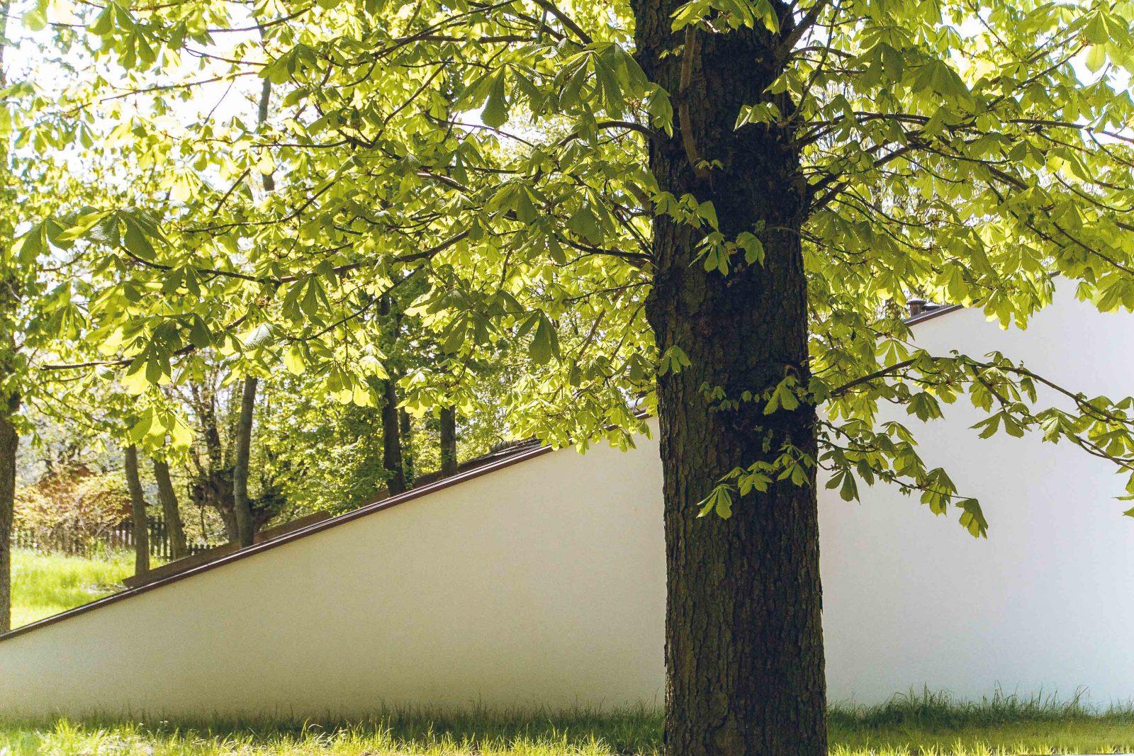 Baum gruen Gebaeude detail
